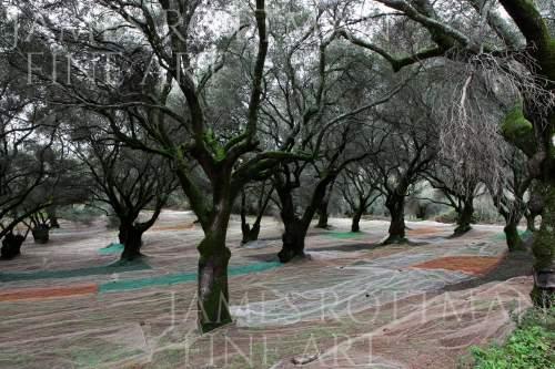 Vincenzo Pietropaolo-Sacred Grove Calabria Italy